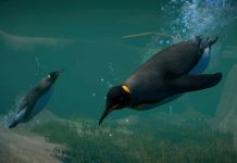 Planet Zoo Aquatic Pack